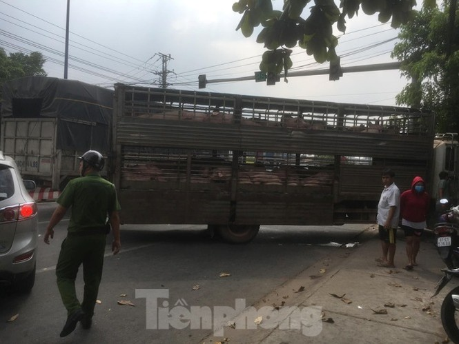 Xe chở 50 con heo tông vào nhà dân khiến quốc lộ 13 kẹt cứng 2km - ảnh 3