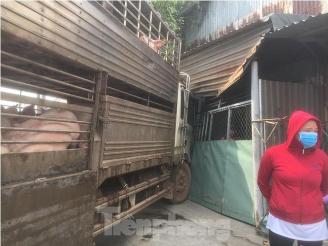 Xe chở 50 con heo tông vào nhà dân khiến quốc lộ 13 kẹt cứng 2km - ảnh 2