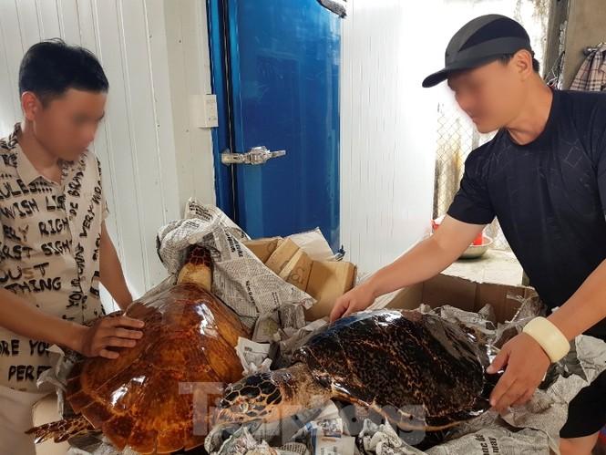 Bắt quả tang vụ buôn bán rùa biển quy mô lớn tuổn qua Trung Quốc - ảnh 1
