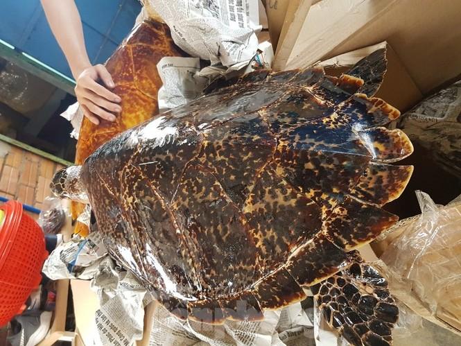 Bắt quả tang vụ buôn bán rùa biển quy mô lớn tuổn qua Trung Quốc - ảnh 2