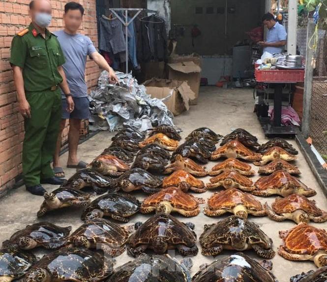 Bắt quả tang vụ buôn bán rùa biển quy mô lớn tuổn qua Trung Quốc - ảnh 3