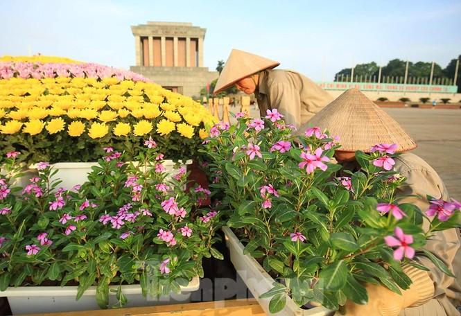 Những người thợ tận tâm dệt những thảm hoa, vườn cảnh quanh Lăng Bác - ảnh 12