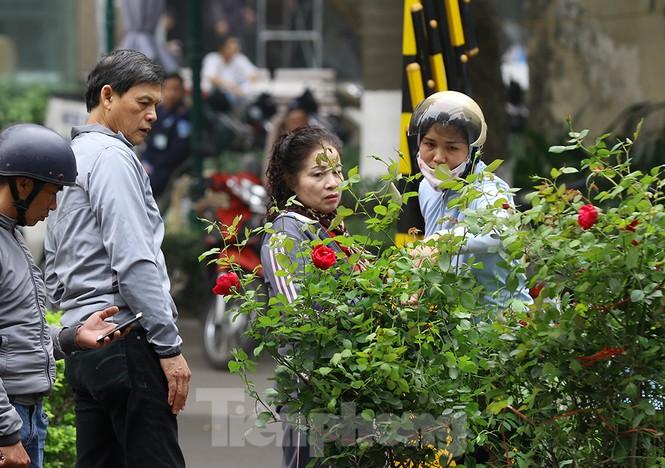 Dưa thần tài, lan hồ điệp khoe sắc xuân trên đường Hoàng Hoa Thám  - ảnh 10