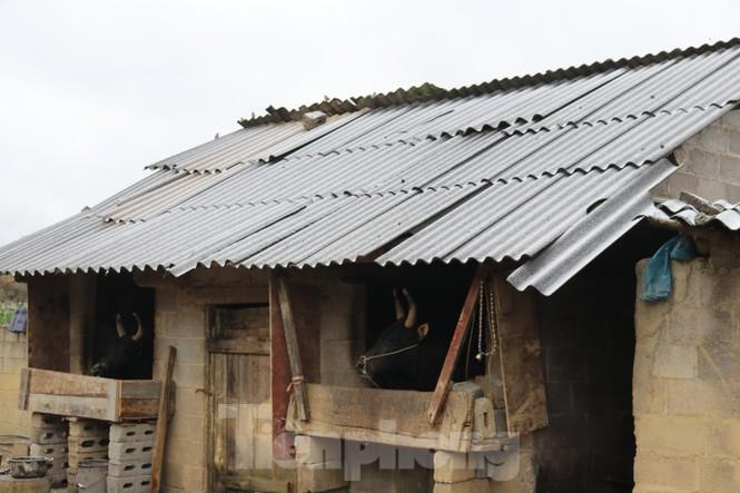 Xuất hiện băng tuyết tại xã biên giới Mèo Vạc - Hà Giang - ảnh 8