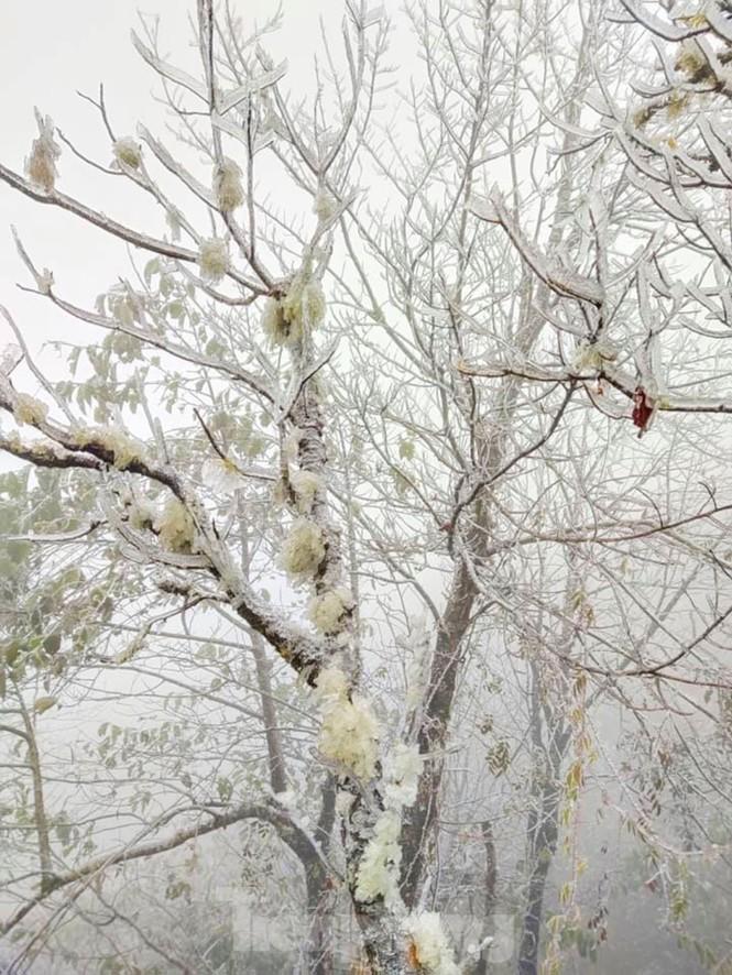 Băng tuyết phủ trắng Y Tý và đèo Ô Quy Hồ - ảnh 4