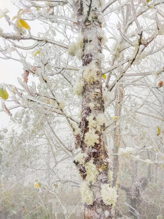 Băng tuyết phủ trắng Y Tý và đèo Ô Quy Hồ - ảnh 5