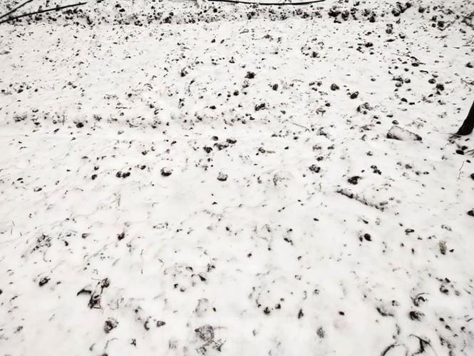 Băng tuyết phủ trắng Y Tý và đèo Ô Quy Hồ - ảnh 6