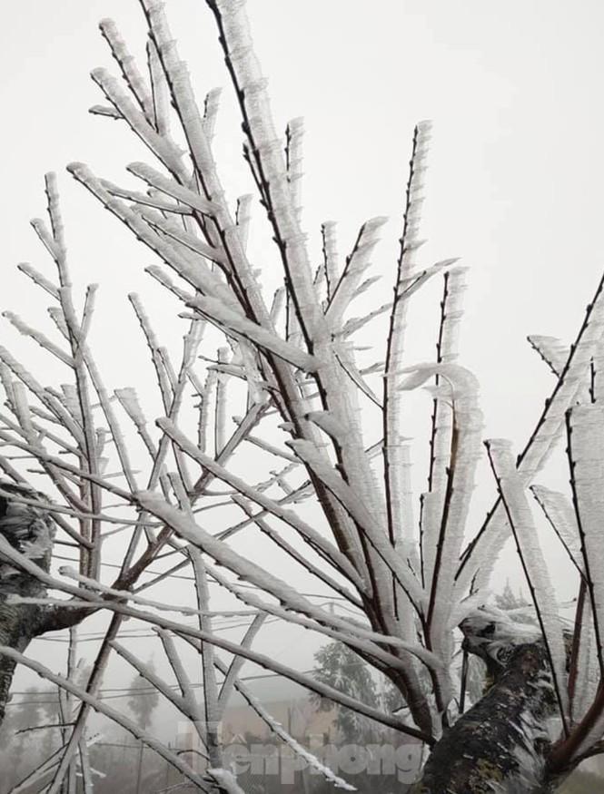 Băng tuyết phủ trắng Y Tý và đèo Ô Quy Hồ - ảnh 8