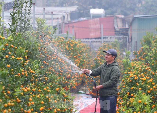 Làng đào Nhật Tân vào mùa - ảnh 12