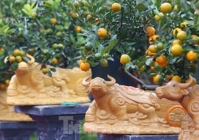 Làng đào Nhật Tân vào mùa - ảnh 13