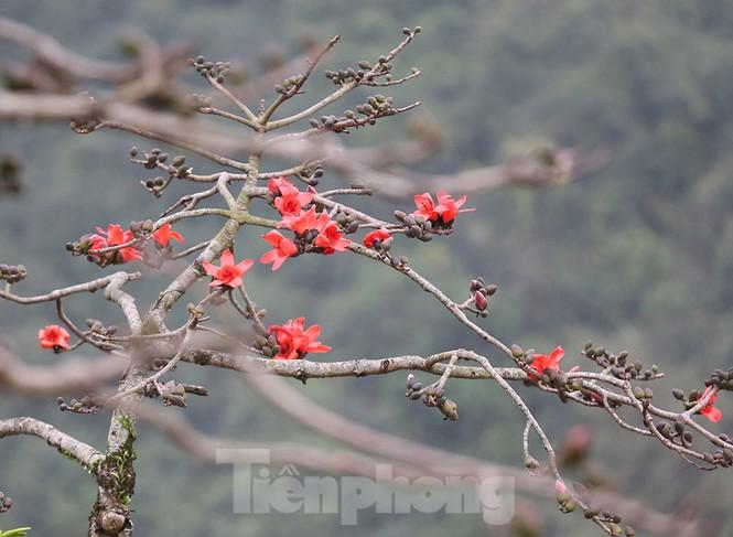 Trẩy hội chùa Hương, ngẩn ngơ ngắm hoa gạo 'thắp lửa' bên suối Yến - ảnh 12