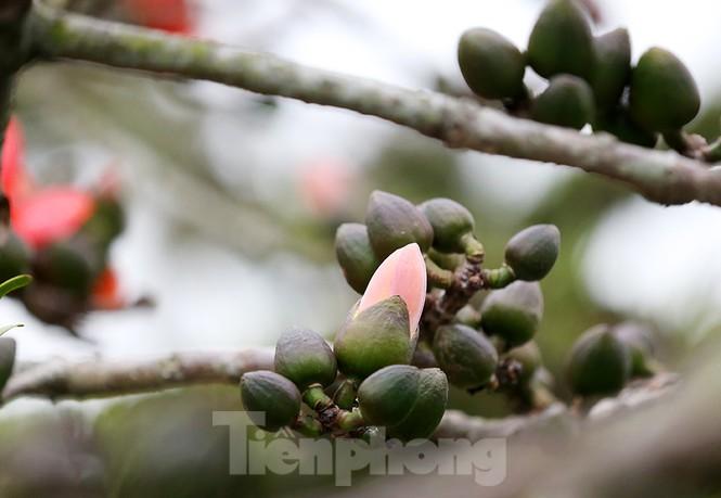 Trẩy hội chùa Hương, ngẩn ngơ ngắm hoa gạo 'thắp lửa' bên suối Yến - ảnh 13