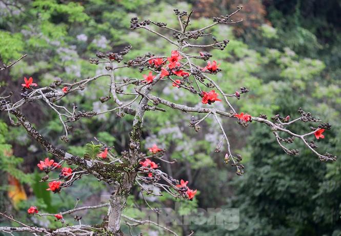 Trẩy hội chùa Hương, ngẩn ngơ ngắm hoa gạo 'thắp lửa' bên suối Yến - ảnh 15