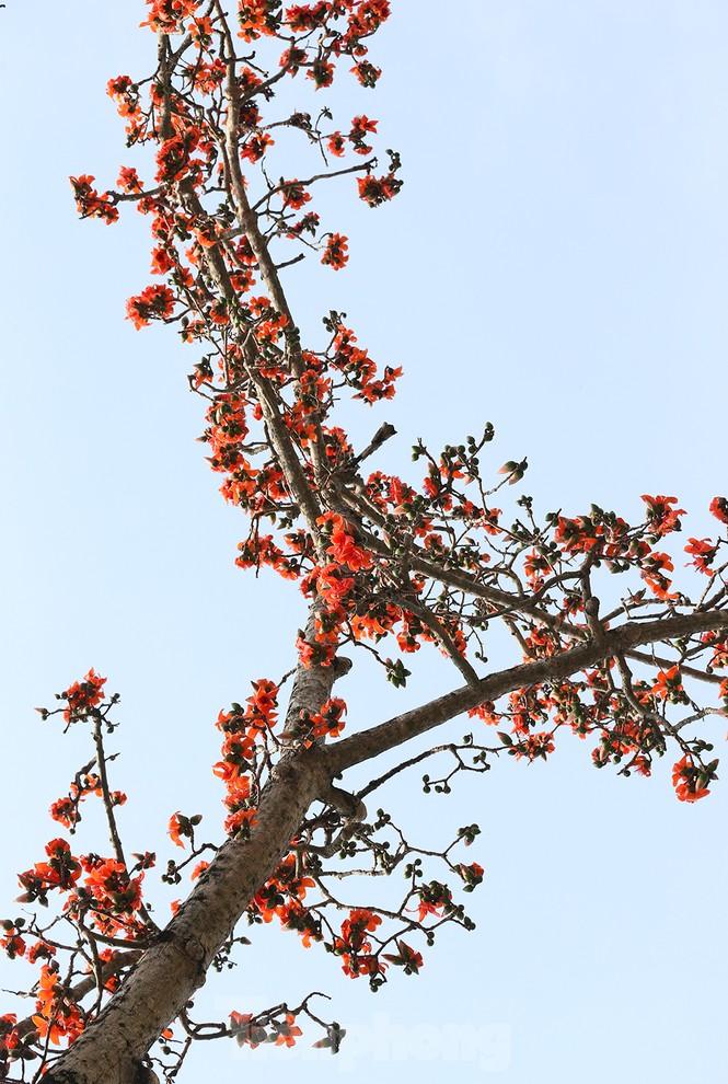 Trẩy hội chùa Hương, ngẩn ngơ ngắm hoa gạo 'thắp lửa' bên suối Yến - ảnh 2