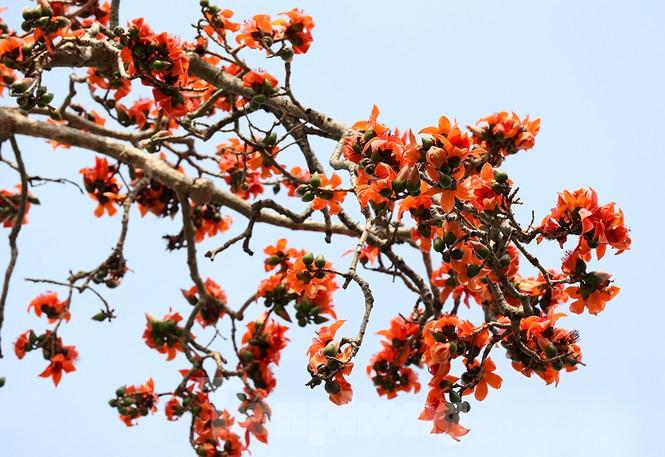 Trẩy hội chùa Hương, ngẩn ngơ ngắm hoa gạo 'thắp lửa' bên suối Yến - ảnh 3
