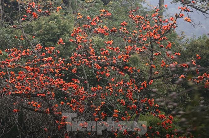 Trẩy hội chùa Hương, ngẩn ngơ ngắm hoa gạo 'thắp lửa' bên suối Yến - ảnh 7