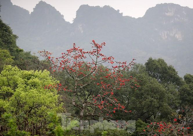 Trẩy hội chùa Hương, ngẩn ngơ ngắm hoa gạo 'thắp lửa' bên suối Yến - ảnh 8