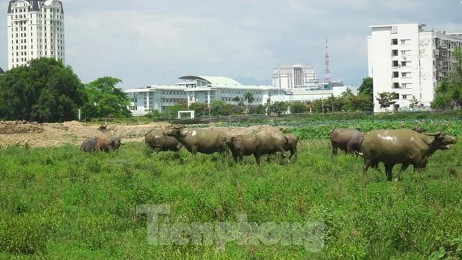 'Rùa bò' tại đại dự án 100 tỷ xây quảng trường, công viên cây xanh lớn nhất TT-Huế - ảnh 2