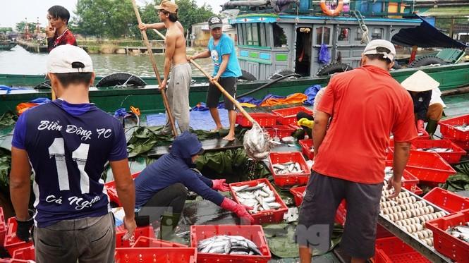 Ngư dân TT-Huế hối hả với những mẻ cá biển cuối cùng trước bão - ảnh 2