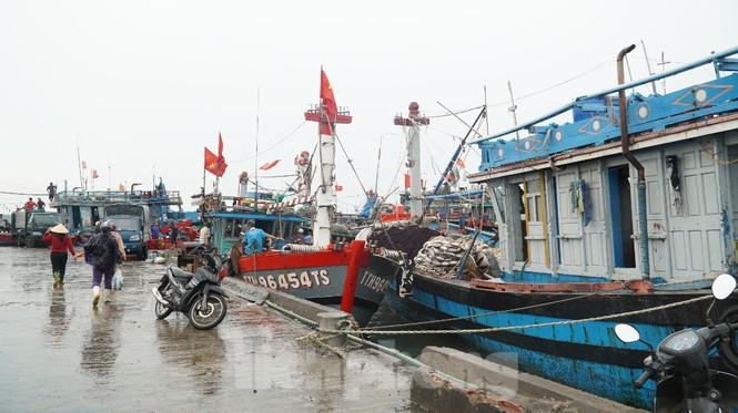Ngư dân TT-Huế hối hả với những mẻ cá biển cuối cùng trước bão - ảnh 7