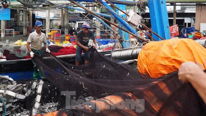 Ngư dân TT-Huế hối hả với những mẻ cá biển cuối cùng trước bão - ảnh 3