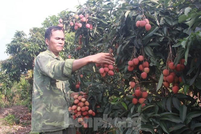Nhật Bản cấp bằng bảo hộ chỉ dẫn địa lý cho vải thiều tỉnh Bắc Giang - ảnh 1