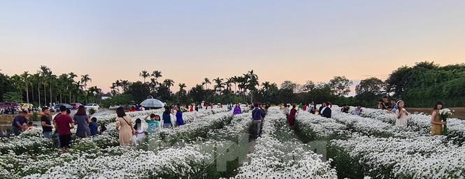 """Nhà vườn ở Hải Phòng bội thu nhờ dịch vụ """"check-in"""" cùng cúc họa mi - ảnh 2"""