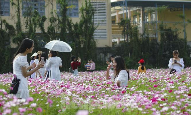 """""""Lạc"""" giữa cánh đồng hoa đang độ khoe sắc ngày xuân - ảnh 3"""