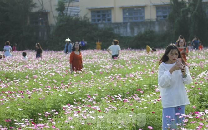 """""""Lạc"""" giữa cánh đồng hoa đang độ khoe sắc ngày xuân - ảnh 2"""