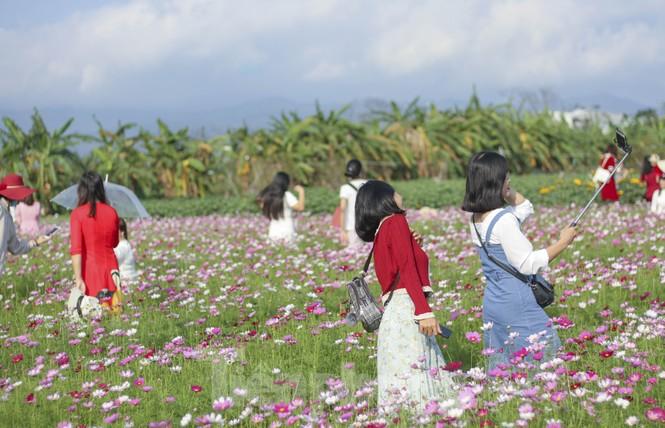"""""""Lạc"""" giữa cánh đồng hoa đang độ khoe sắc ngày xuân - ảnh 4"""