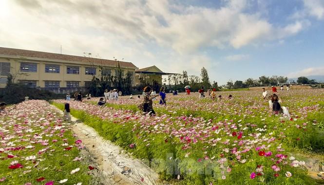 """""""Lạc"""" giữa cánh đồng hoa đang độ khoe sắc ngày xuân - ảnh 1"""