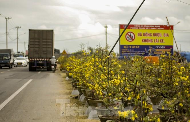 Thủ phủ mai vàng miền Trung đạt doanh thu gần 80 tỷ đồng trong vụ Tết - ảnh 1