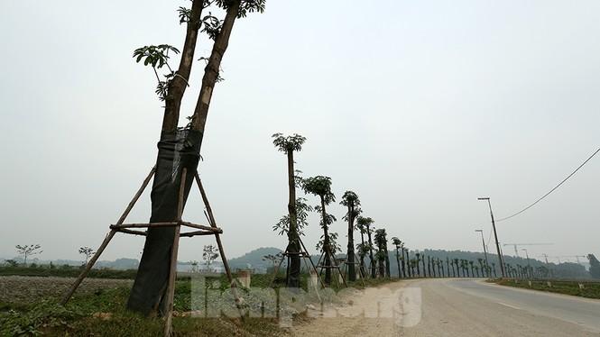 Hàng hoa sữa chuyển từ Hà Nội lên bãi rác Nam Sơn giờ ra sao? - ảnh 1