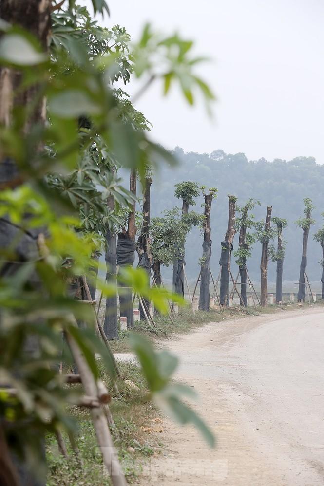 Hàng hoa sữa chuyển từ Hà Nội lên bãi rác Nam Sơn giờ ra sao? - ảnh 2