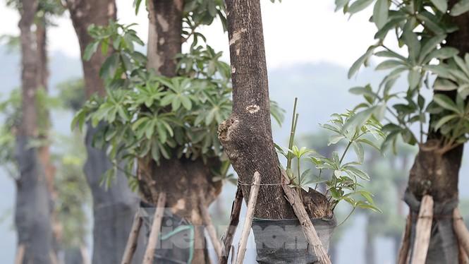 Hàng hoa sữa chuyển từ Hà Nội lên bãi rác Nam Sơn giờ ra sao? - ảnh 6