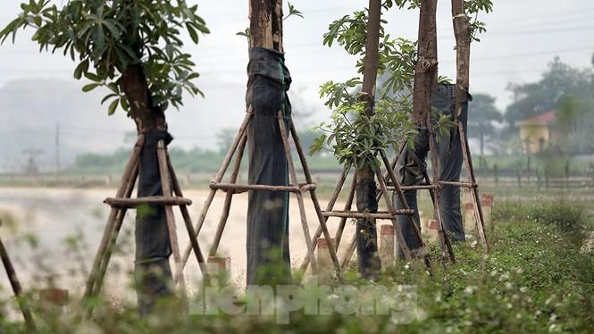 Hàng hoa sữa chuyển từ Hà Nội lên bãi rác Nam Sơn giờ ra sao? - ảnh 12