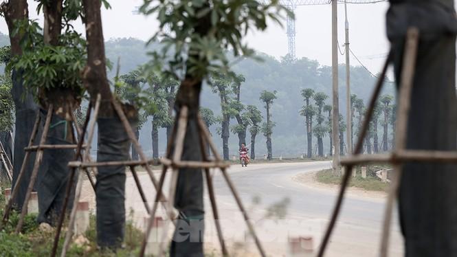 Hàng hoa sữa chuyển từ Hà Nội lên bãi rác Nam Sơn giờ ra sao? - ảnh 13