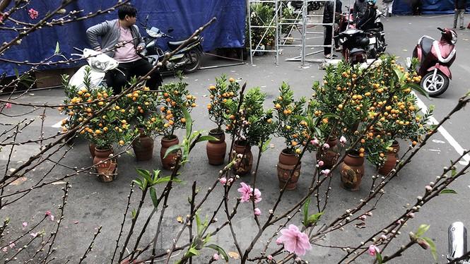 Nhộn nhịp chợ hoa tết lâu đời nhất Hà Nội - ảnh 4
