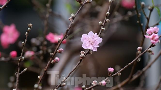 Nhộn nhịp chợ hoa tết lâu đời nhất Hà Nội - ảnh 9