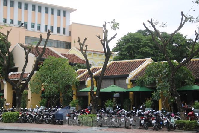 Hàng trăm cây xanh ở Đà Nẵng bị cặt trụi cành - ảnh 3