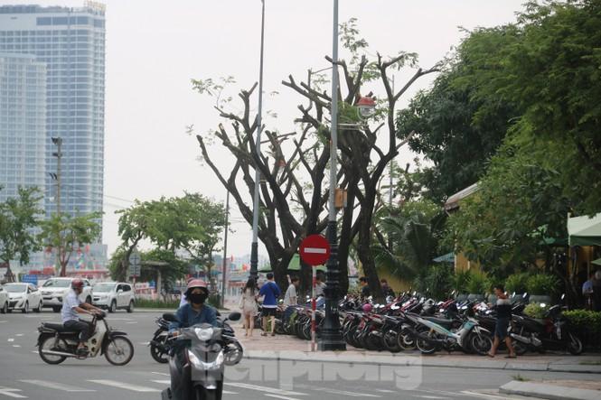 Hàng trăm cây xanh ở Đà Nẵng bị cặt trụi cành - ảnh 9