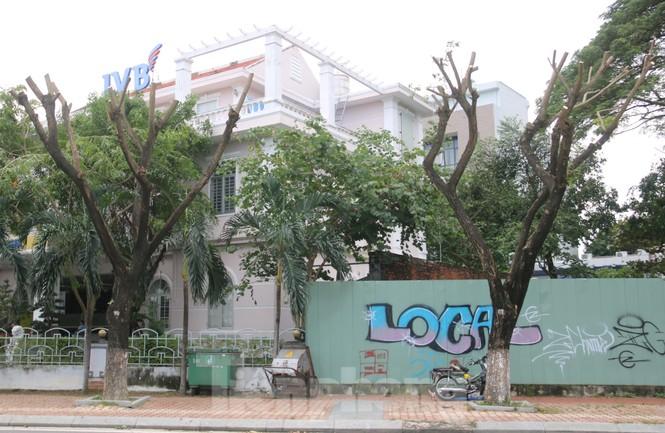 Hàng trăm cây xanh ở Đà Nẵng bị cặt trụi cành - ảnh 10