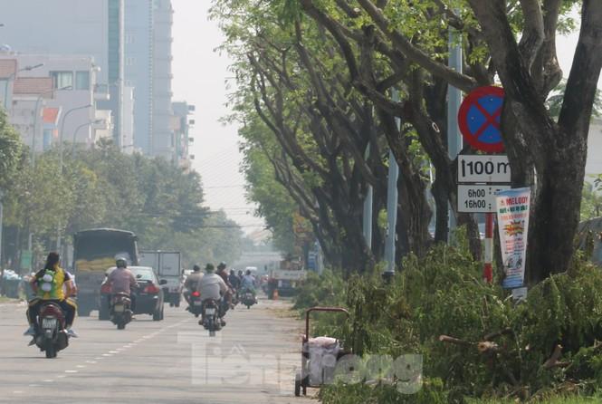 Hàng trăm cây xanh ở Đà Nẵng bị cặt trụi cành - ảnh 11