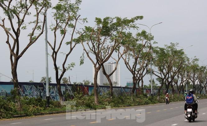 Hàng trăm cây xanh ở Đà Nẵng bị cặt trụi cành - ảnh 5