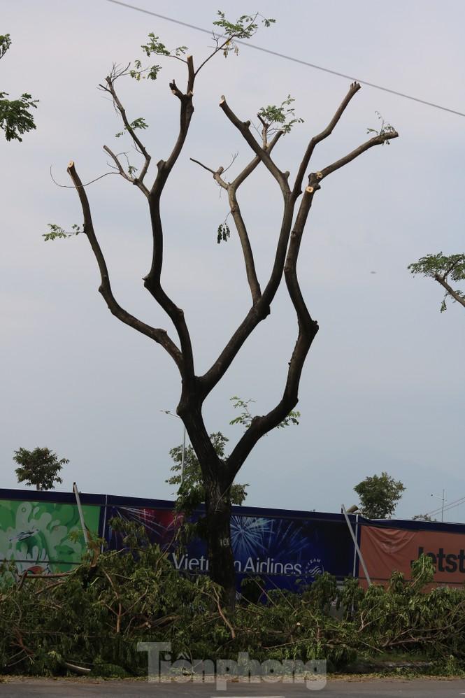 Hàng trăm cây xanh ở Đà Nẵng bị cặt trụi cành - ảnh 6