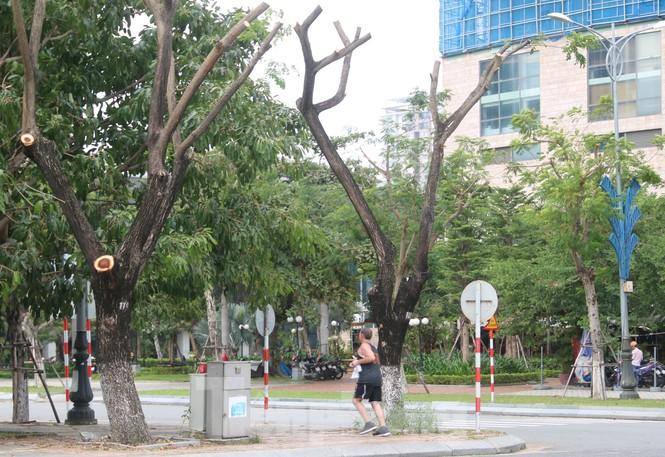 Hàng trăm cây xanh ở Đà Nẵng bị cặt trụi cành - ảnh 2