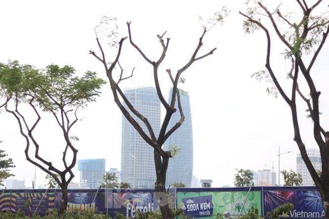 Hàng trăm cây xanh ở Đà Nẵng bị cặt trụi cành - ảnh 7
