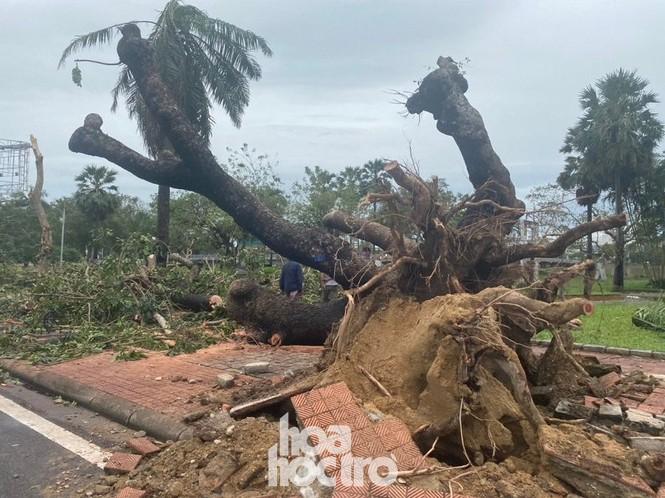 """Thừa Thiên - Huế: Người dân thức trắng, """"cụ"""" xà cừ ngã quỵ trước sự tấn công của bão số 13 - ảnh 9"""