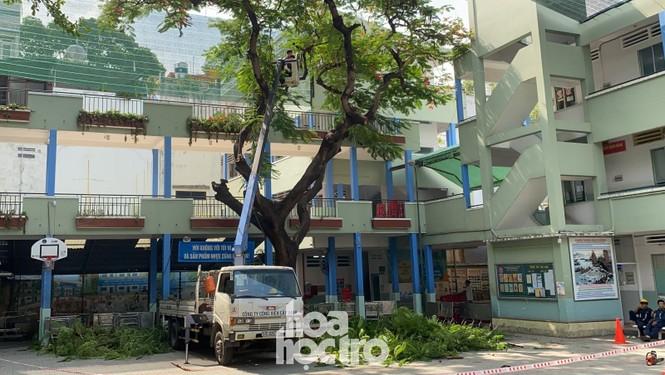 Toàn cảnh vụ cây phượng bật gốc đè vào người học sinh gây thương vong tại trường Bạch Đằng - ảnh 5