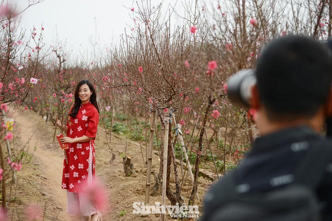 """Cận cảnh vườn đào Nhật Tân được giới trẻ """"Check-in"""" ngày cuối năm - ảnh 9"""